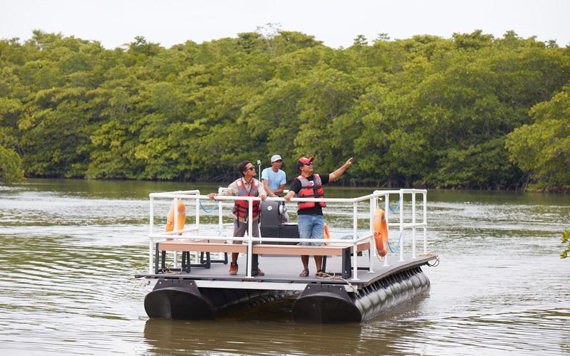 Mangrove Pontoon Cruise at best resort in bintan